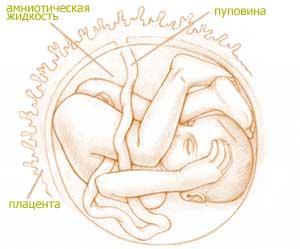 32 неделя беременности это какой месяц беременности